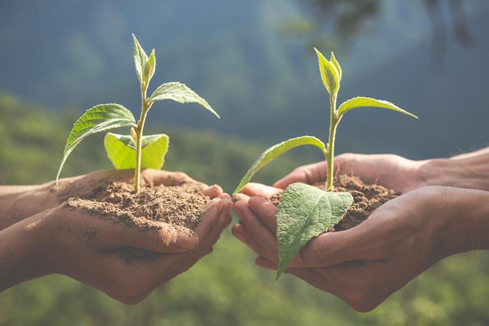 professor e aluno segurando mudas a serem plantadas, representando a agenda escolar online Timely, como uma solução sustentável